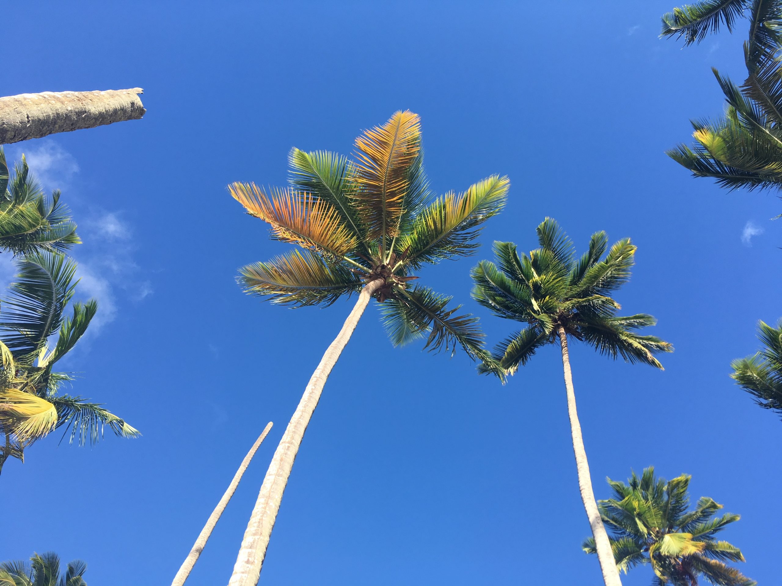 Capodanno 2020: Antille